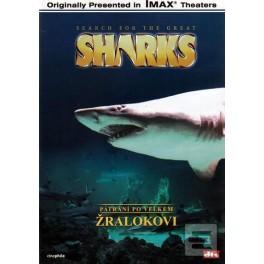 Pátrání po velkém žralokovi DVD